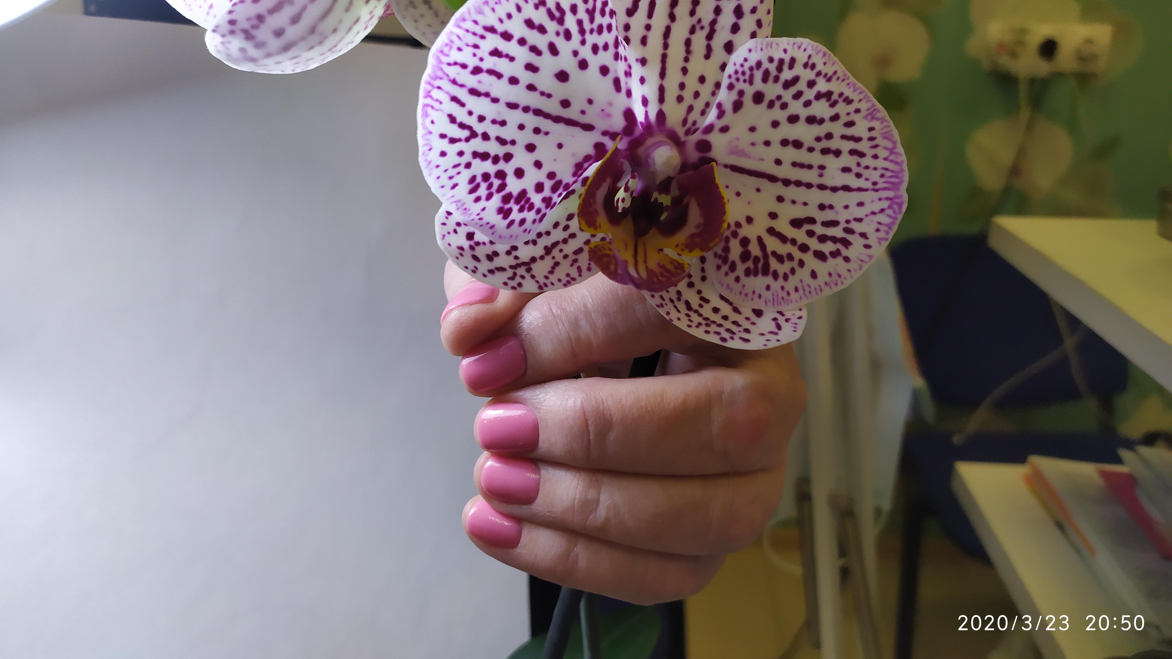 Маникюр в лиловом цвете.