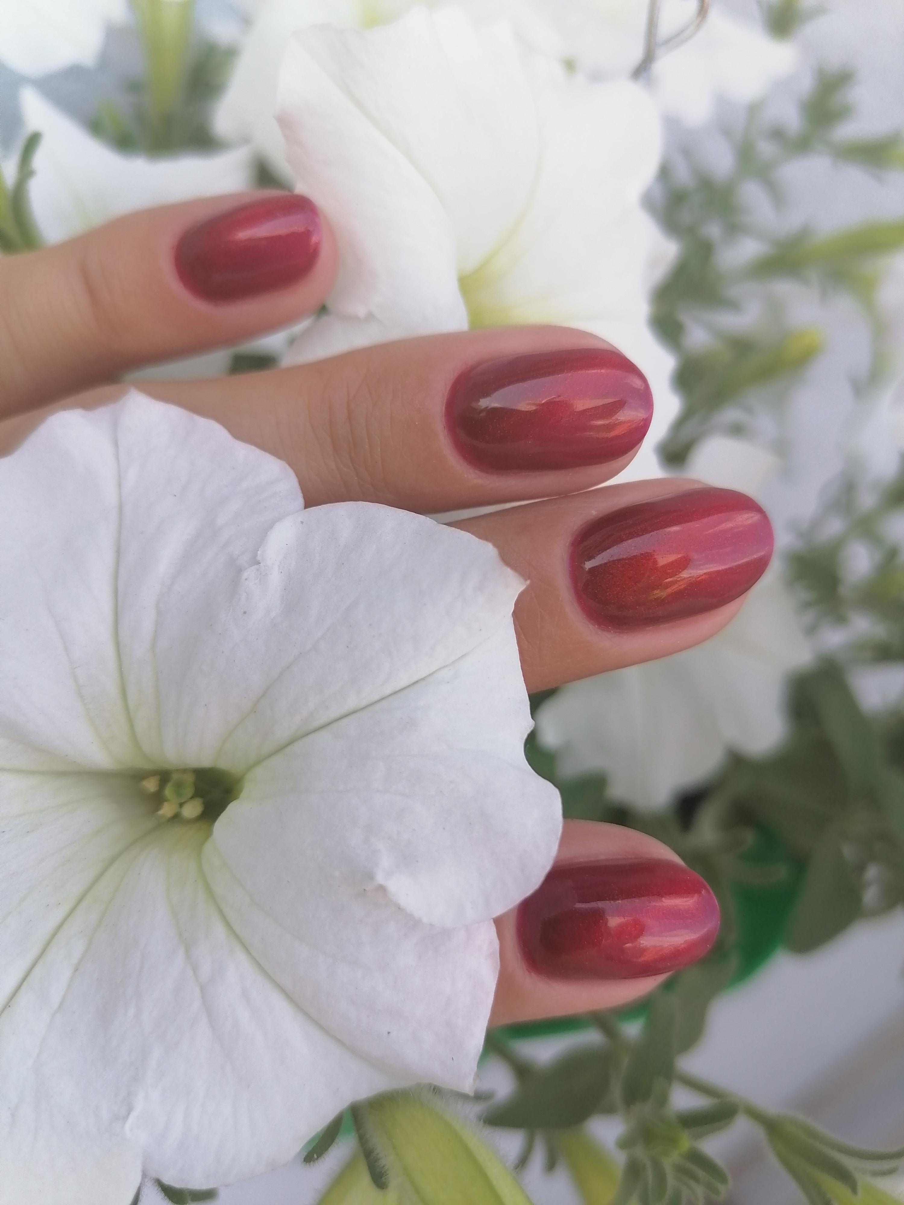 Маникюр с эффектом кошачий глаз в темно-красном цвете на короткие ногти.